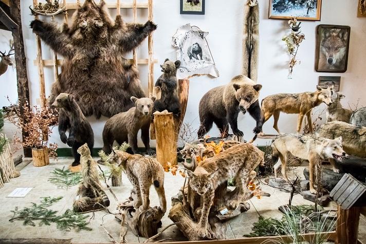 Wystawa w Muzeum Knieja