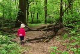Lisia Góra – rezerwat i plac zabaw