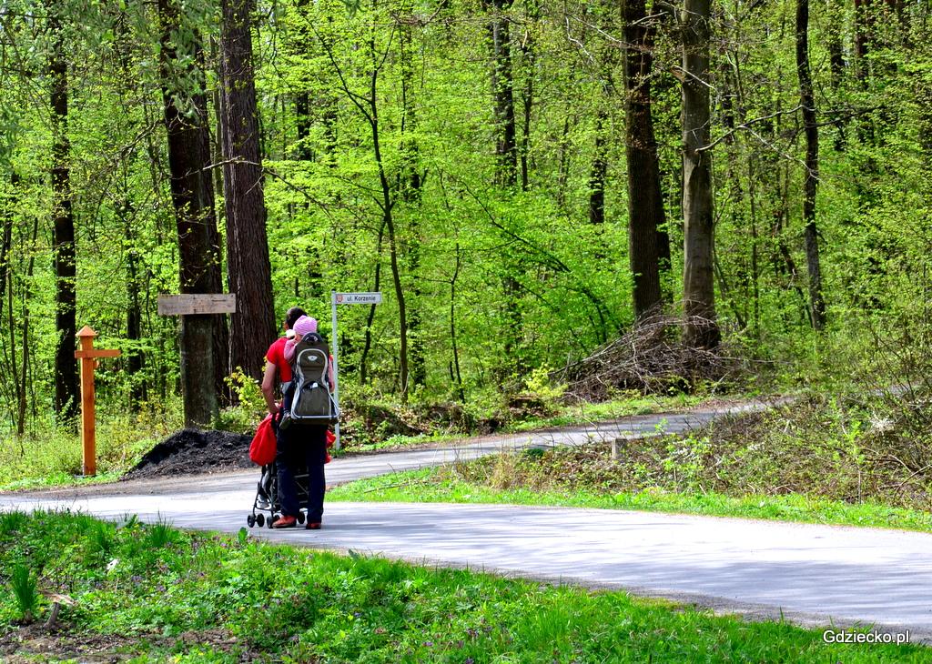 Wycieczka do lasu: Jak bezpiecznie i miło spędzić czas na łonie natury?