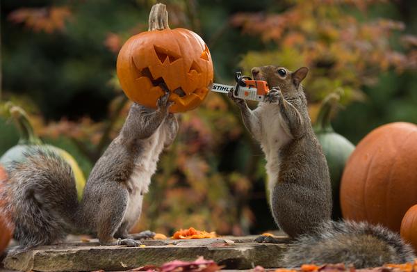 najpopularniejsze-zdjecie-na-halloween-max-ellis