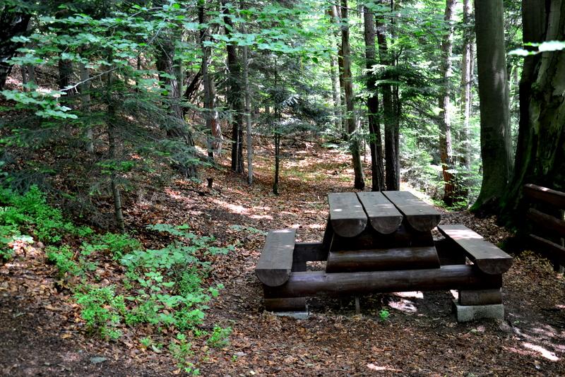 Miejce na piknik w lesie