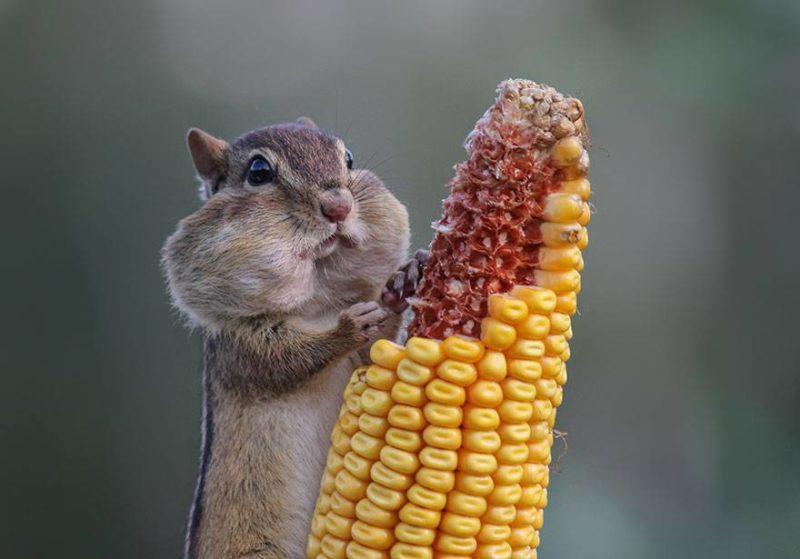 I właśnie dlatego, nie należy napychać sobie ust jedzeniem? Człowiek śmiesznie potem wygląda.