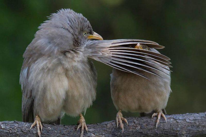 Ptaka zasłania oczy drugiemu
