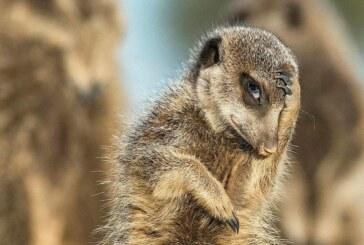 Najzabawniejsze konkursowe zdjęcia zwierząt